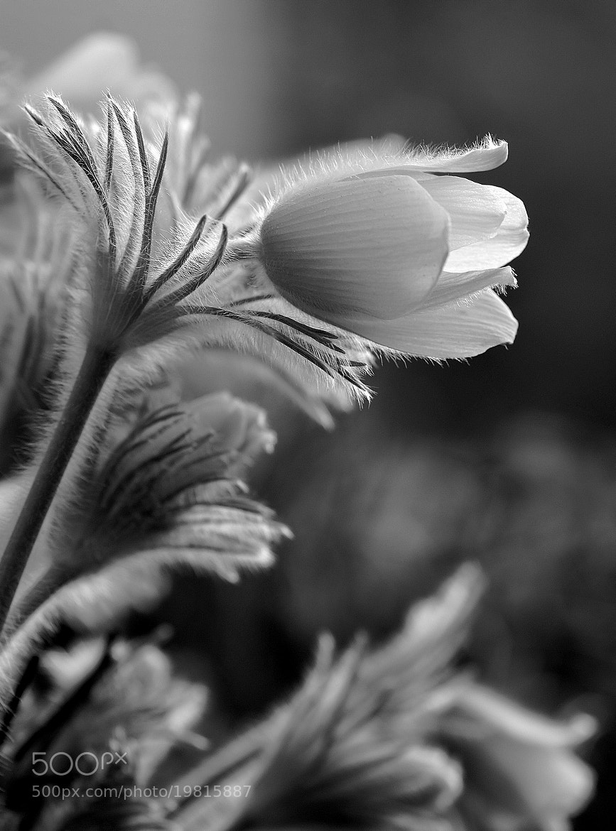 Photograph B & W by Andy 58 on 500px