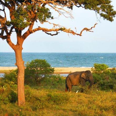 Elephant by the sea, Nikon COOLPIX S6200
