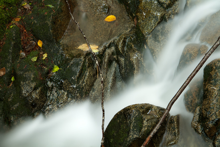Photograph Creek Detail, North Cascades by Justin Marx on 500px