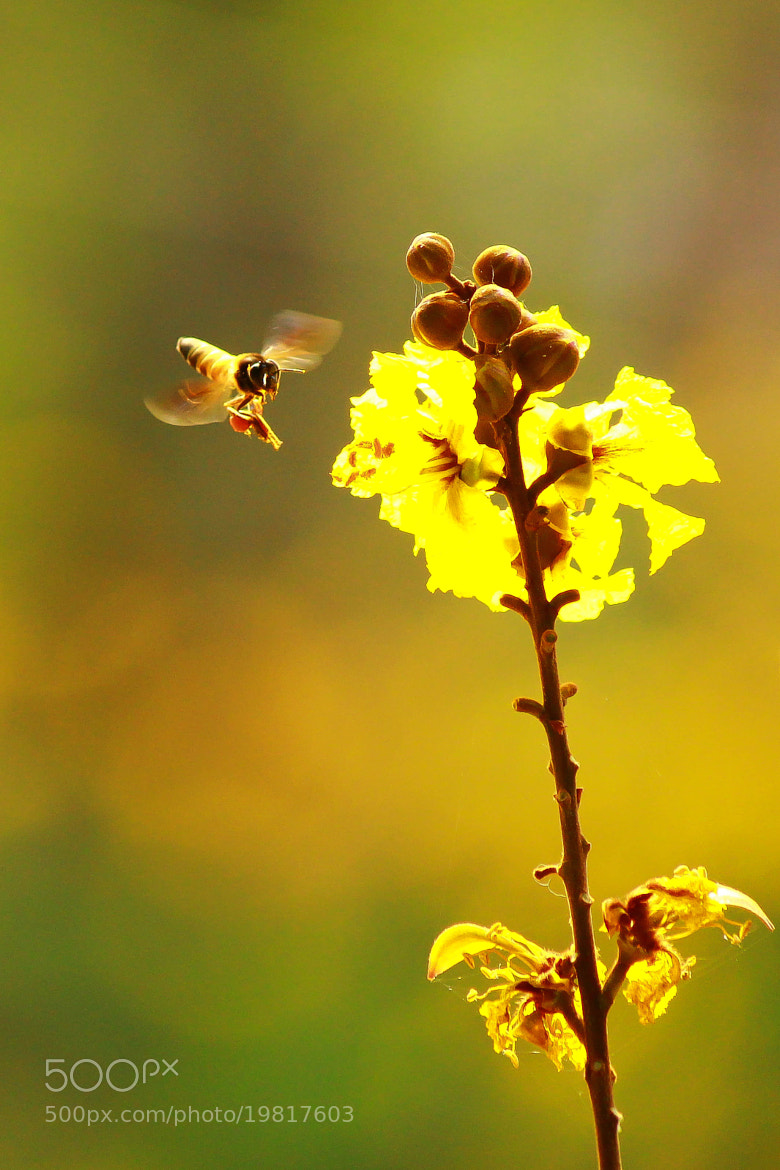 Photograph Buzzzzzz.. by Santosh KiranMamillapalli on 500px