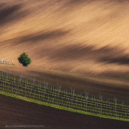 Wineyard in spring, Olympus E-M1, SIGMA 50-500mm F4-6.3 DG HSM