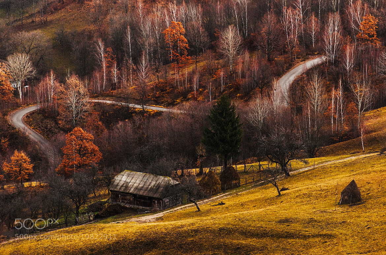 Photograph Autumn pastels by Cristi Jora on 500px