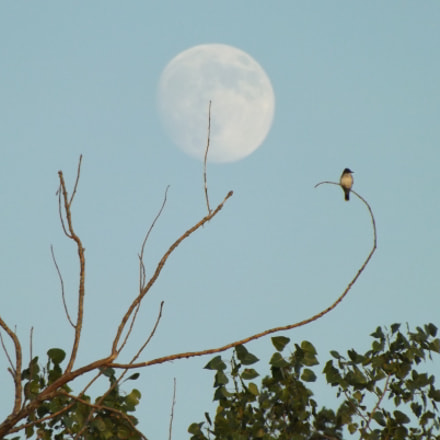 Moon behind bird, Fujifilm FinePix S4530