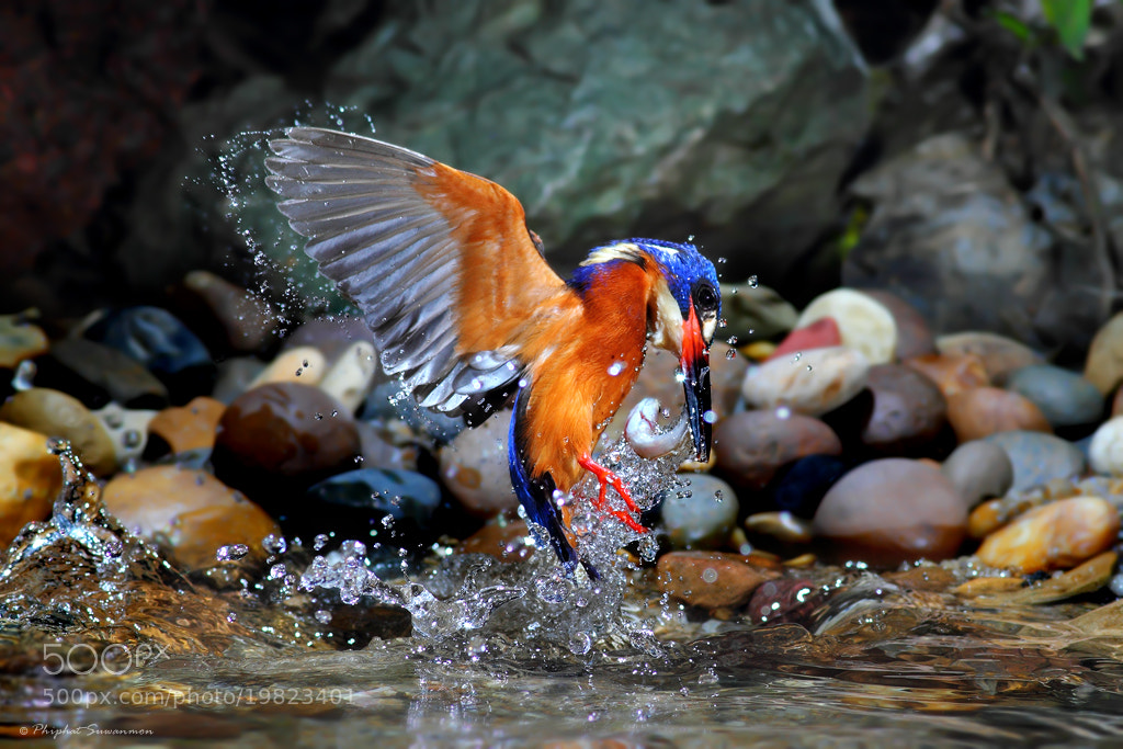 Photograph ~.Catching fish.~ by Phiphat Suwanmon on 500px