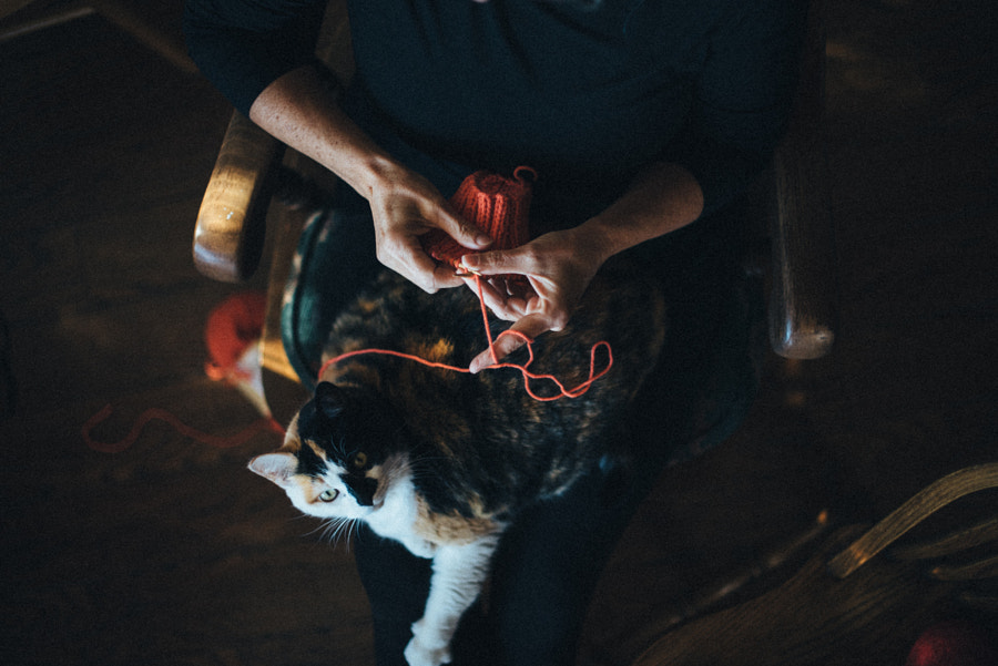 Knitting with Molly the Cat 2 by Alaina Leslie on 500px.com