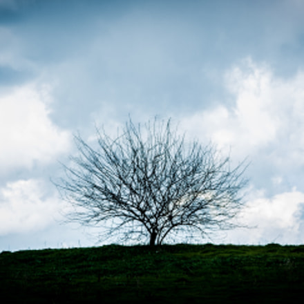 lonely tree, Canon EOS KISS DIGITAL X, Canon EF 75-300mm f/4-5.6