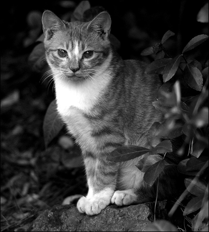 Photograph Cat's gaze by D W Kim on 500px