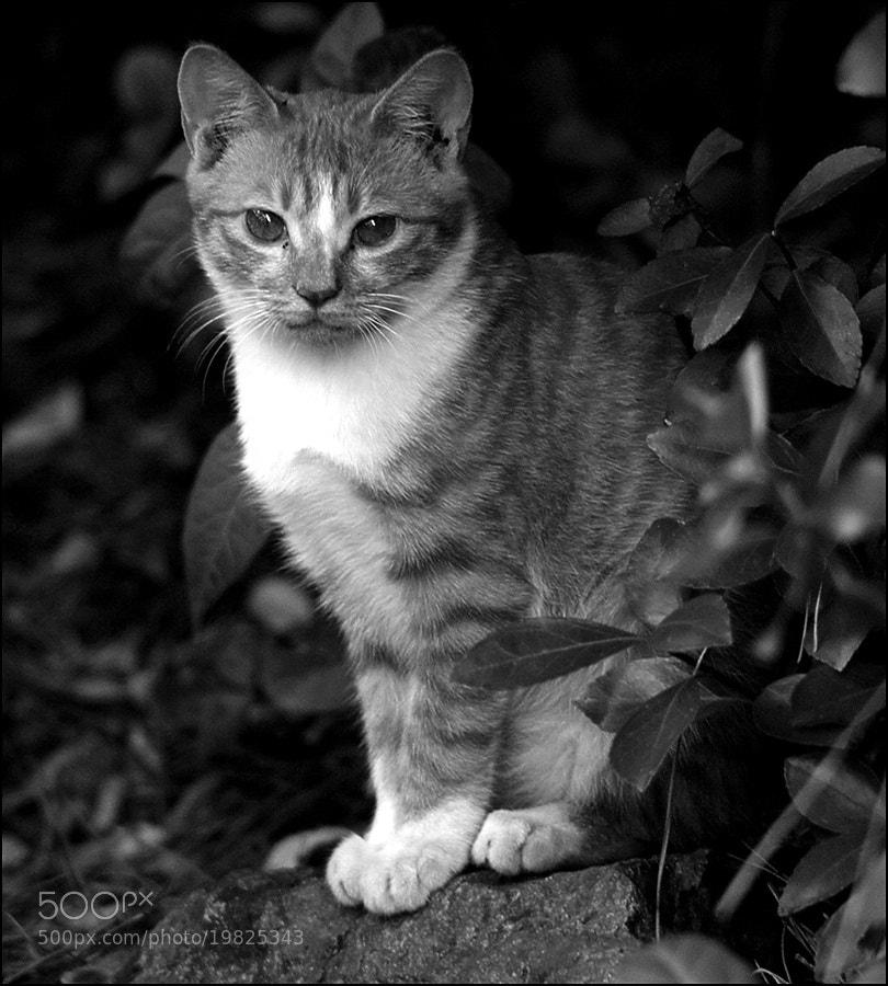 Photograph Cat's gaze by D W Kim on 500px