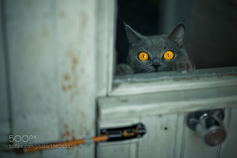 Photograph  Let me in by alexander kan on 500px
