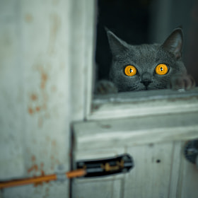 Let me in by alexander kan (alexkan)) on 500px.com