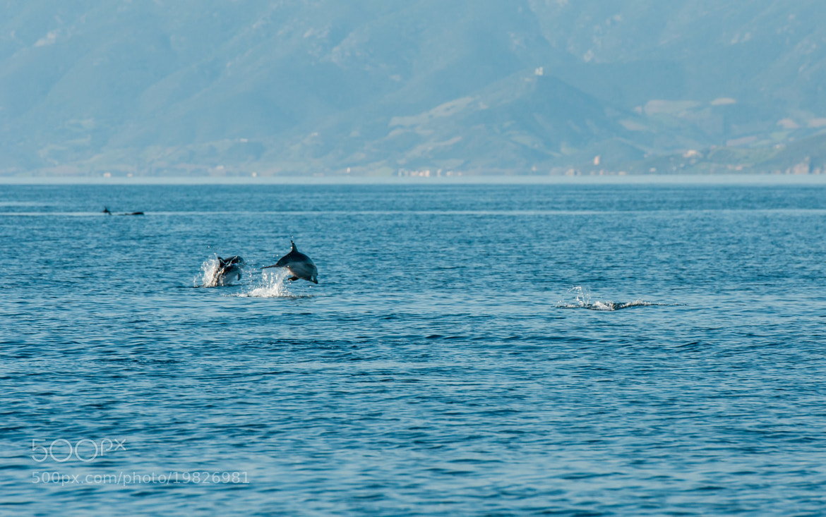 Photograph Dolphins by Carlo Murenu on 500px