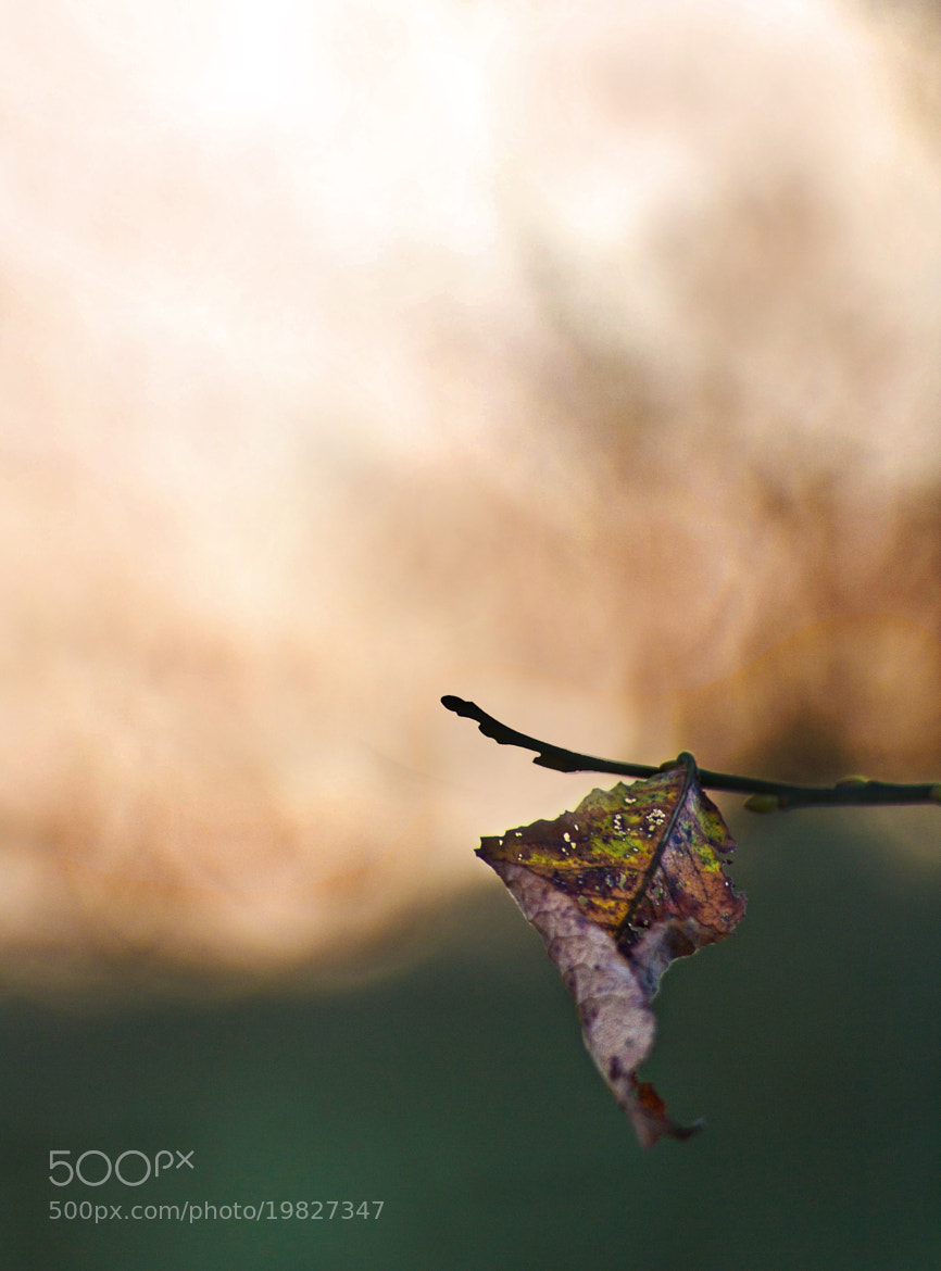 Photograph The Last Leaf of Autumn by Robert K. Baggs on 500px