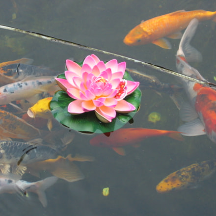 lotus and fishes, Canon POWERSHOT A80