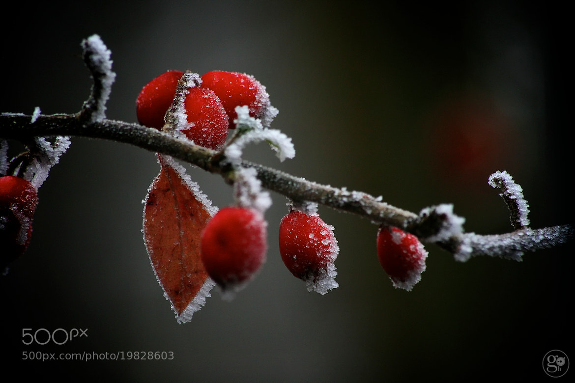 Photograph Ice Red by Graham Hodgetts on 500px