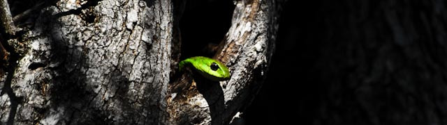 Photograph Boomslang by Andrew Gaylord on 500px
