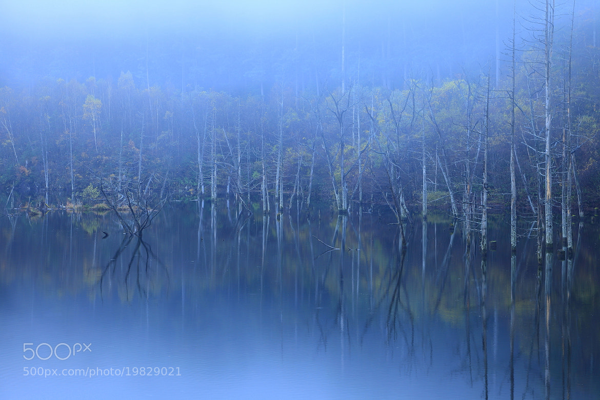 Photograph Foggy Lake by yume . on 500px