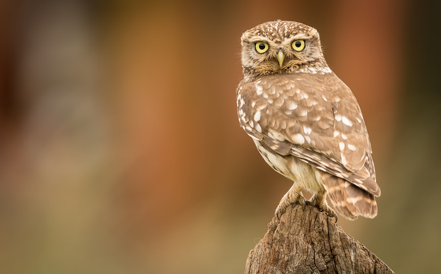 little stare by Mark Bridger on 500px.com