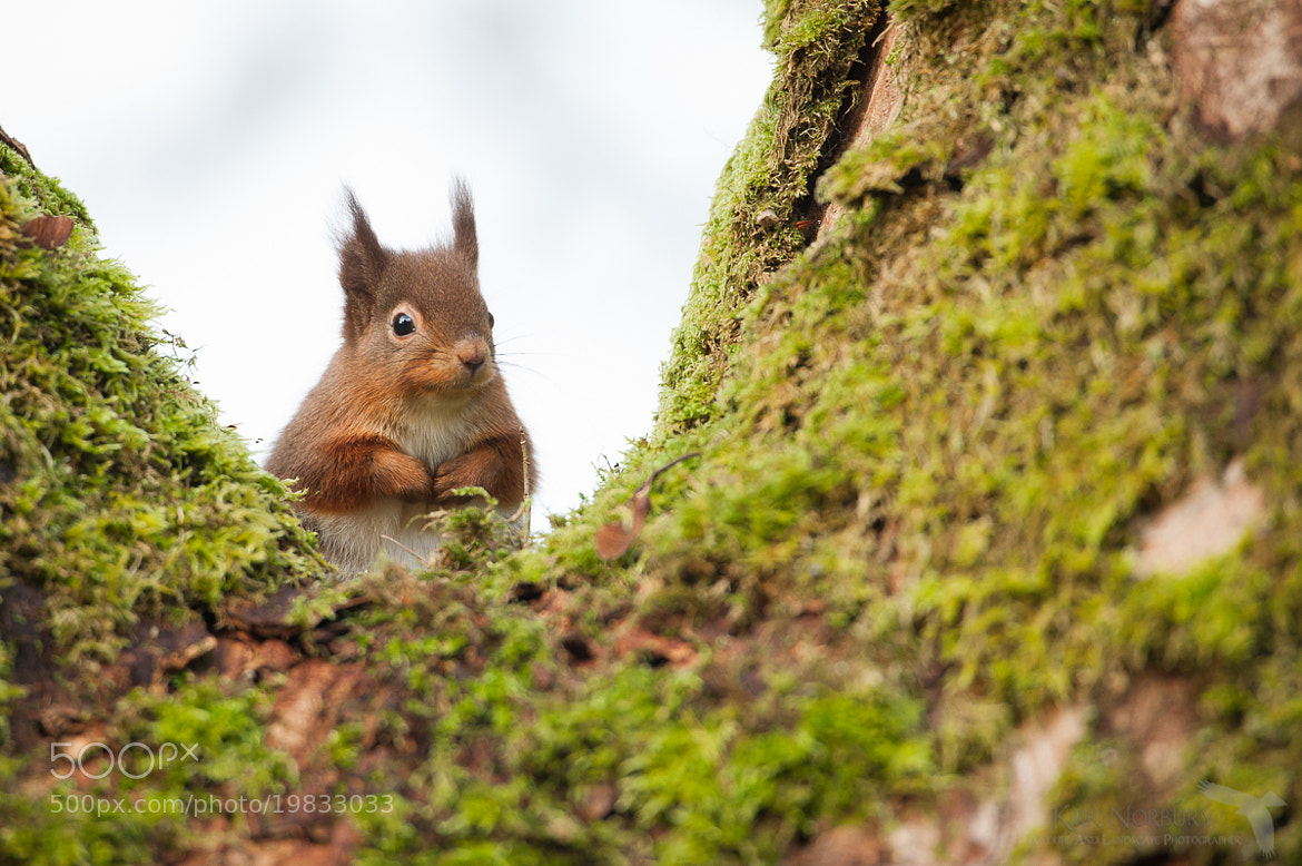 Photograph Please Sir, May I Have Some More Nuts? by Kirk Norbury on 500px