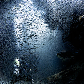 Diver immersed in silversides by Ellen Cuylaerts (EllenCuylaerts)) on 500px.com