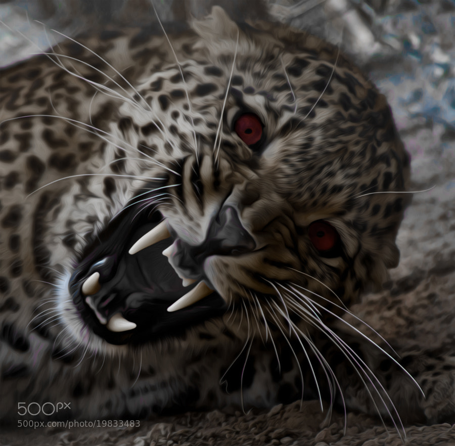 Photograph Leopard Vampire by jamil ghanayem on 500px