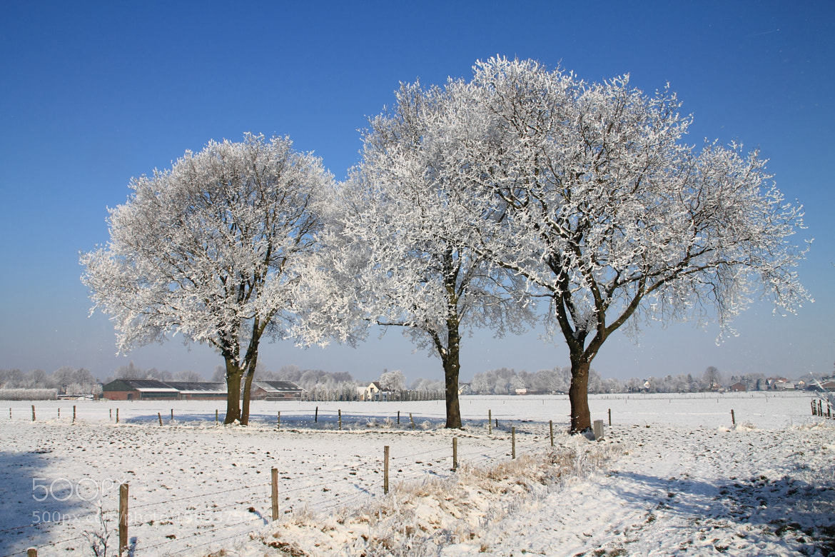 Photograph Trees covered in snow by Mathijs Vos on 500px