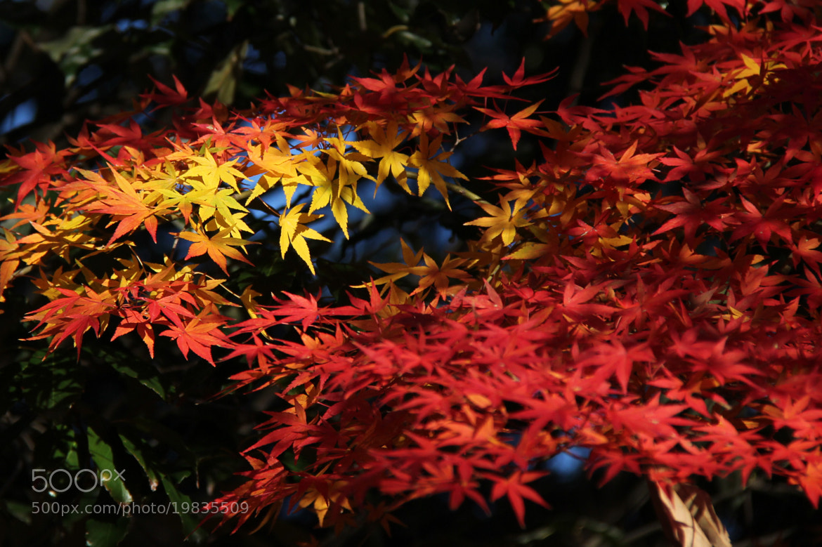 Photograph Autumn colors #16 by S.m. Yang on 500px
