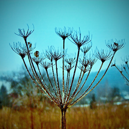 The fennel on a, Nikon COOLPIX L3