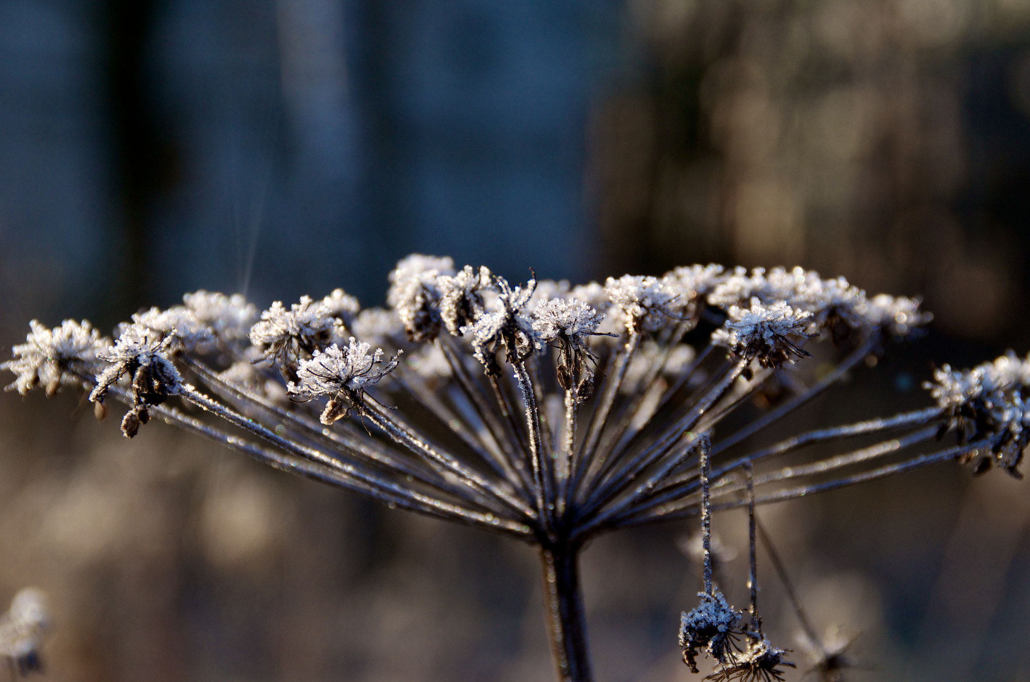 Photograph The pace of the Winter by Andrey Alekseev on 500px