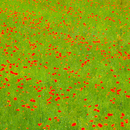 Red dots on green, Canon POWERSHOT PRO1