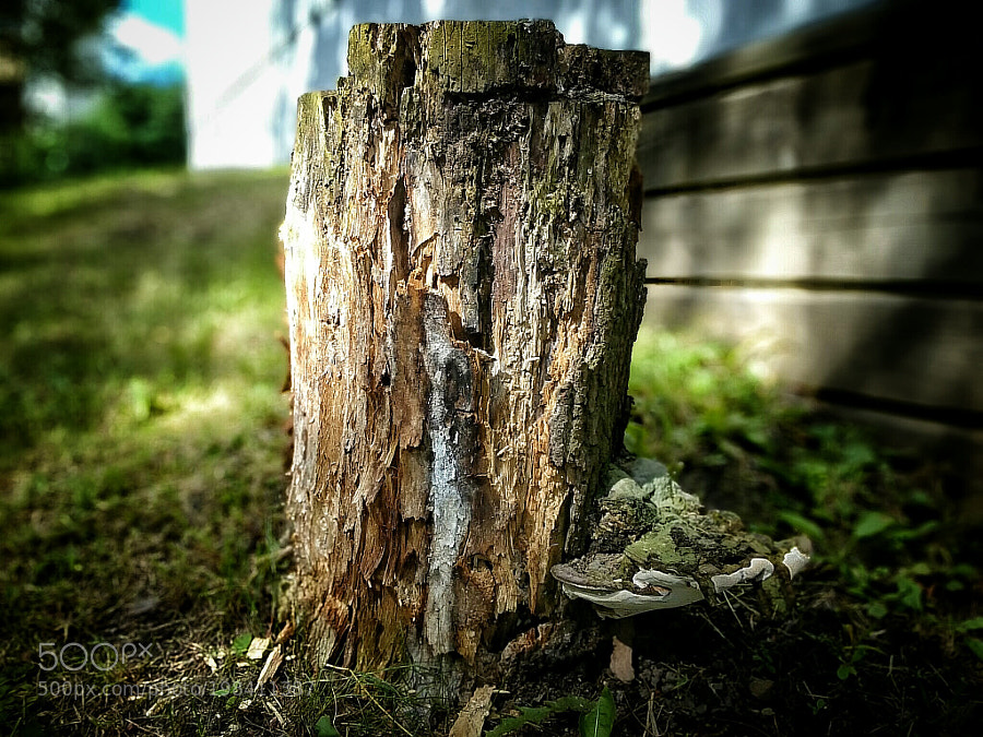 Tree Stump by tarkane
