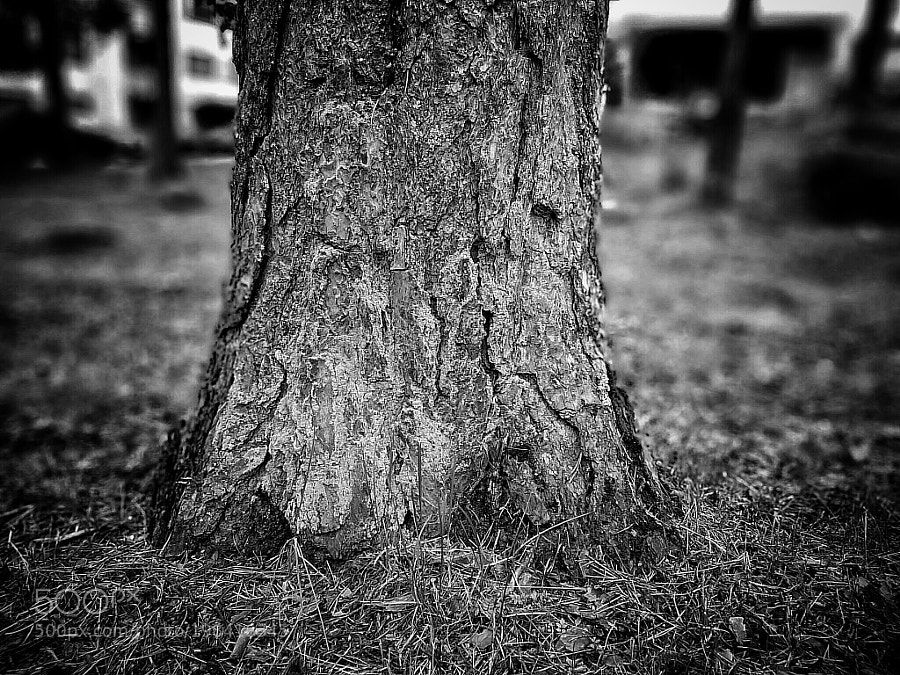 Tree - B&W Version. by tarkane