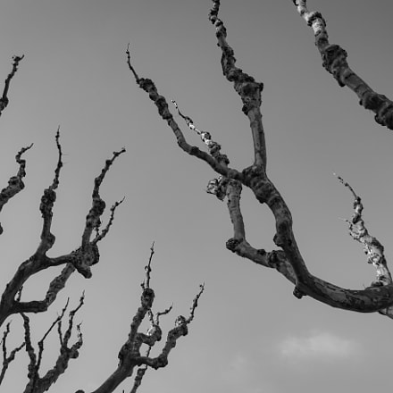 Branches, Sony DSC-RX10, 24-200mm F2.8