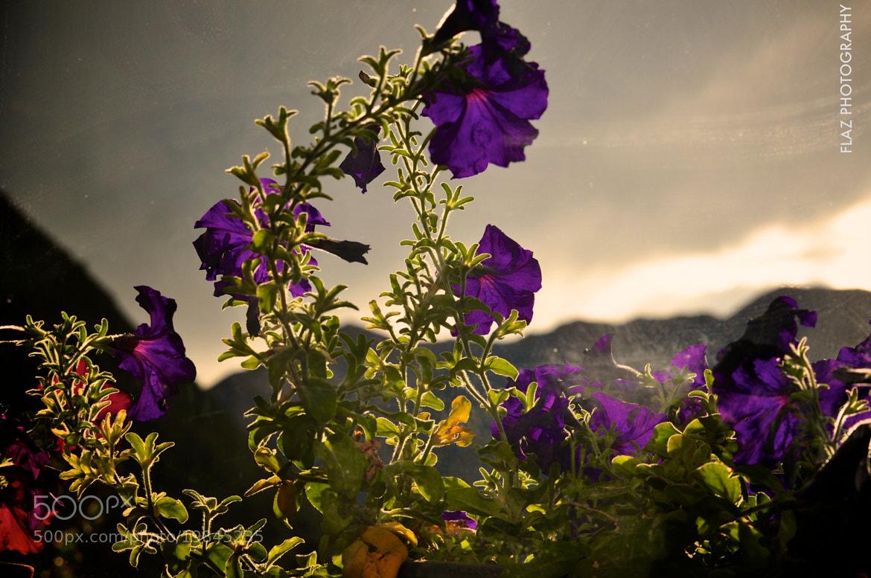 Photograph Backlit by Florencia Azambuja on 500px