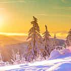 Black Forest Morning Light
