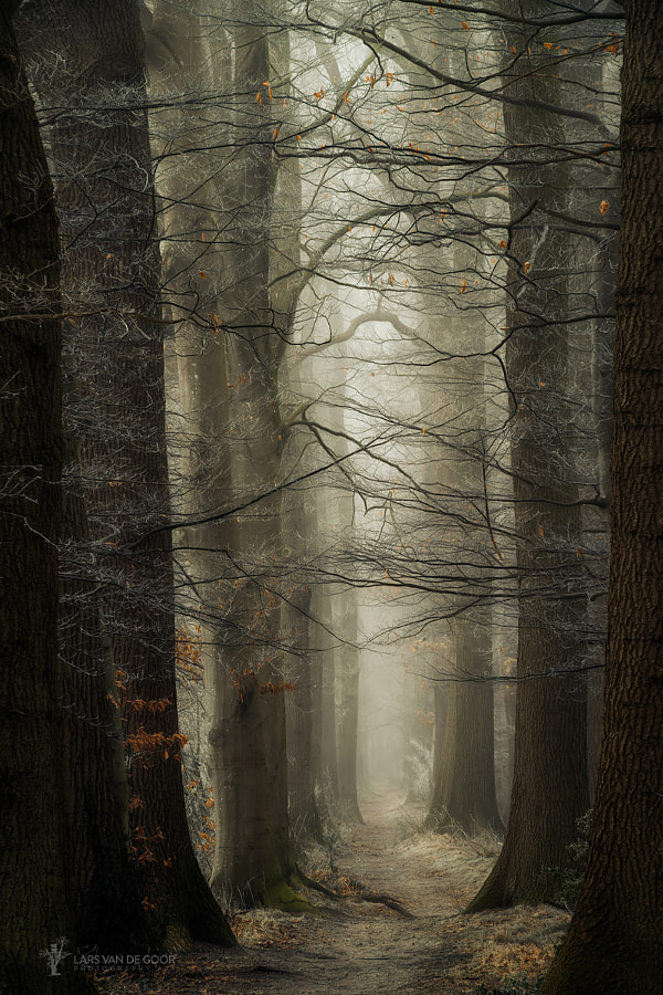 Branches by Lars van de Goor on 500px.com