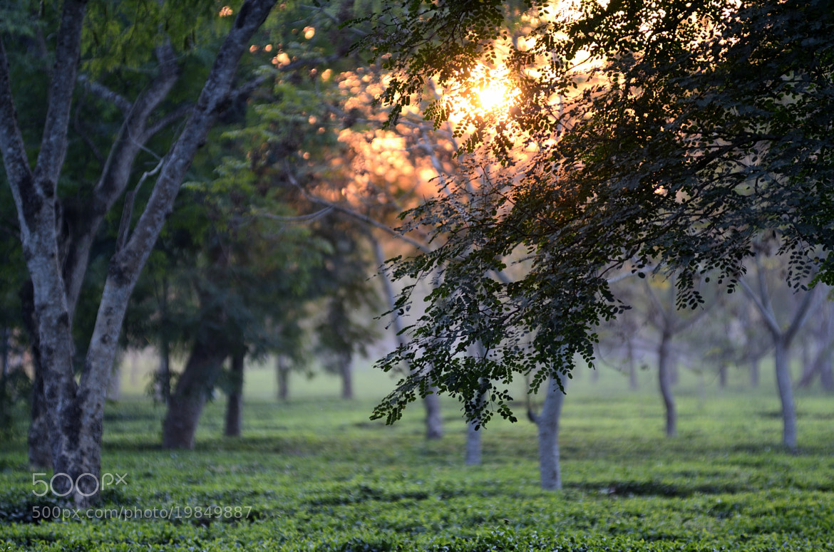 Photograph The Beauty of Tea Gardens by Vedanta Baruah on 500px