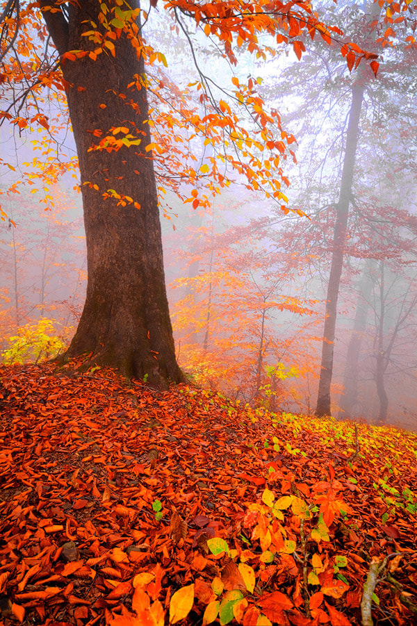 Photograph Autumn 6! by Asghar Mohammadi Nasrabadi on 500px