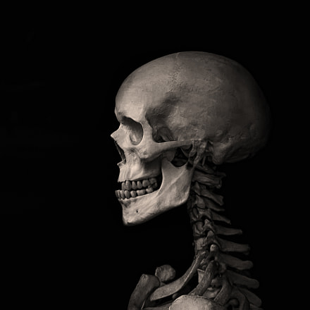 cervical spine and skull, Nikon D5100, Sigma 18-50mm F2.8-4.5 DC OS HSM