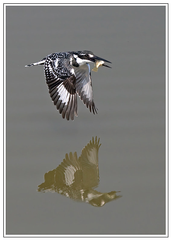 Photograph Pied Reflection by Hendri Venter on 500px