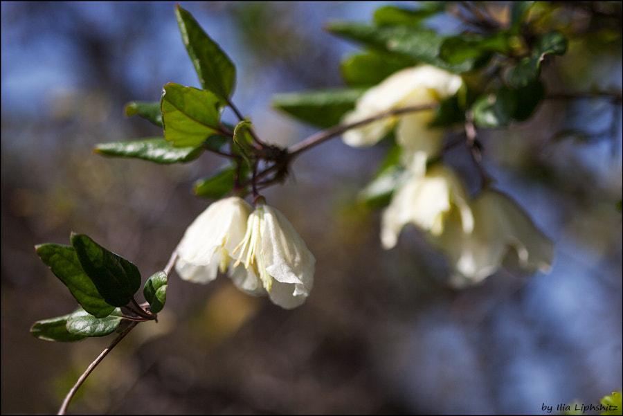 Spring №2