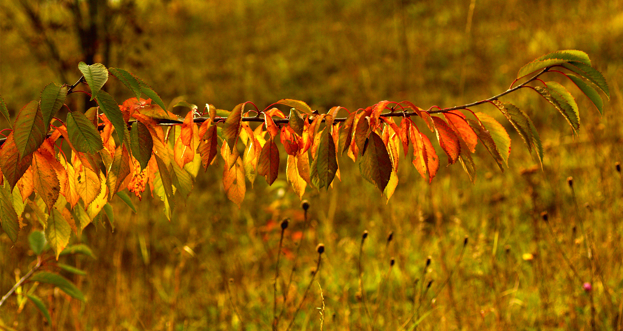 Photograph Hanging Out to Dry! by Chrissie Barrow on 500px