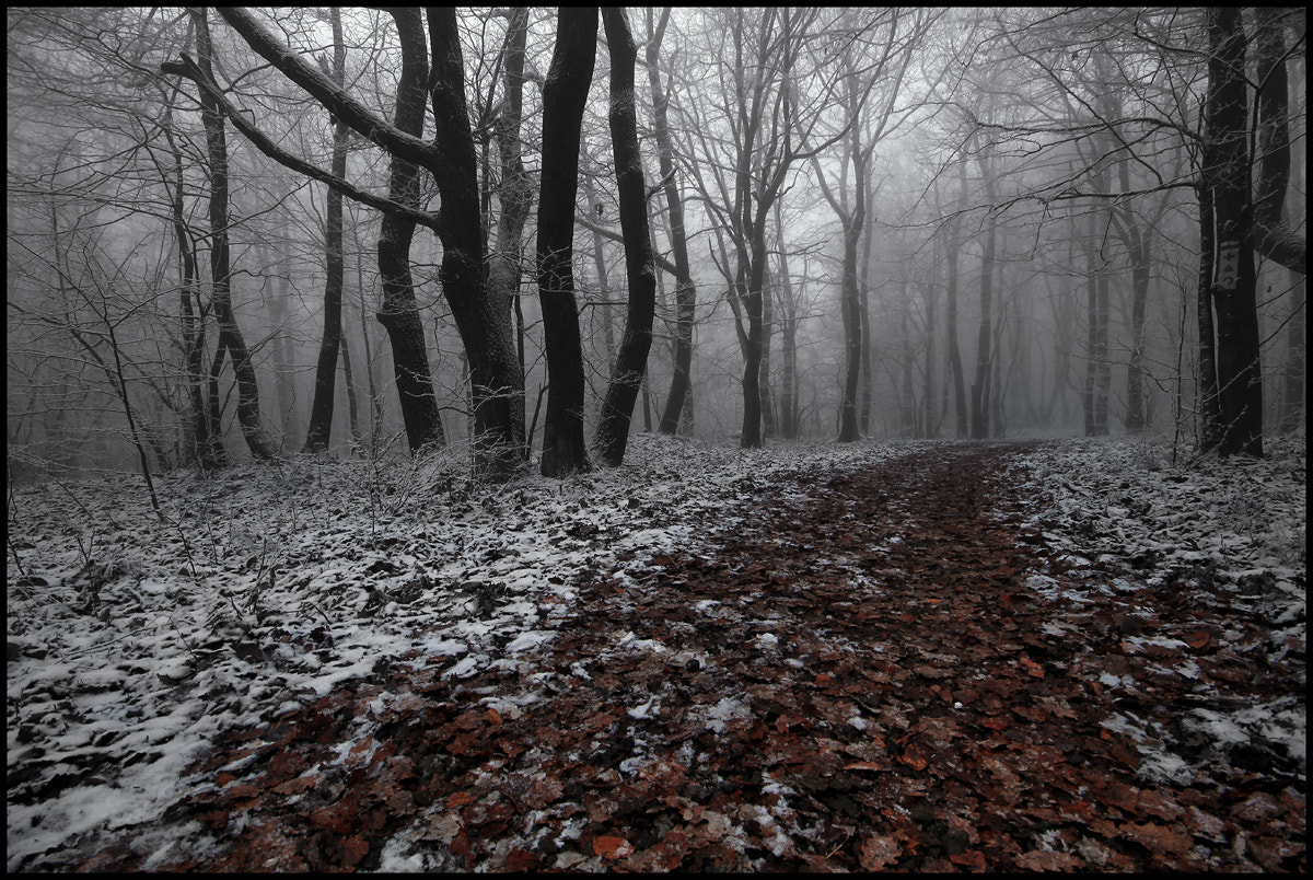 Photograph path by Gabor  Medzihradszky on 500px