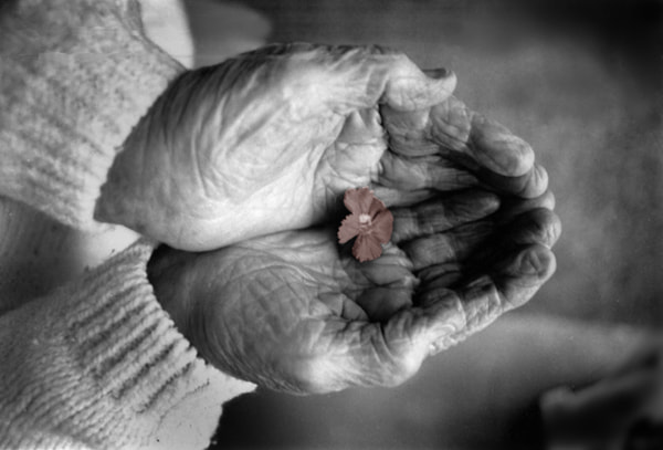 Photograph Grandmother Hands by Jay Godfrey on 500px
