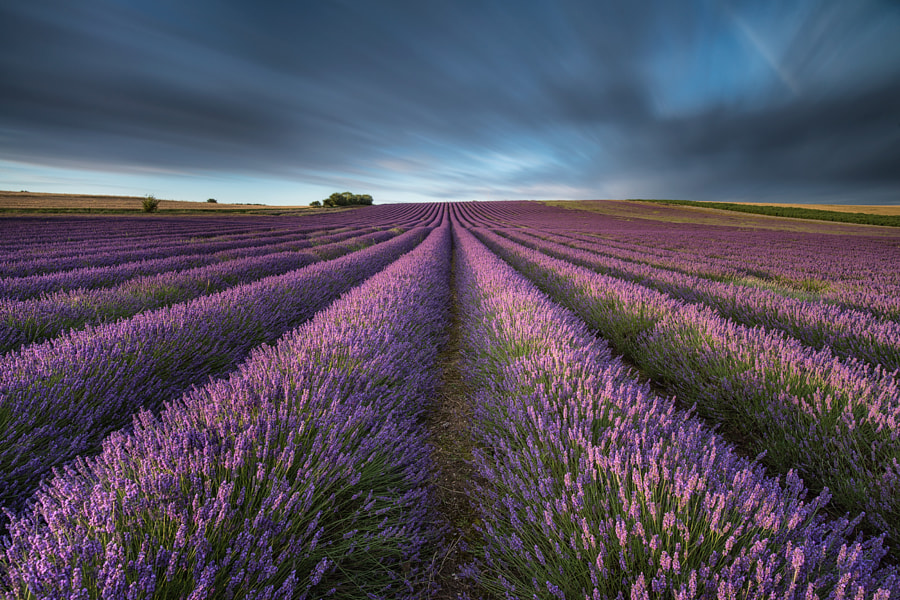 lavender fields forever by Mirek Galagus on 500px.com