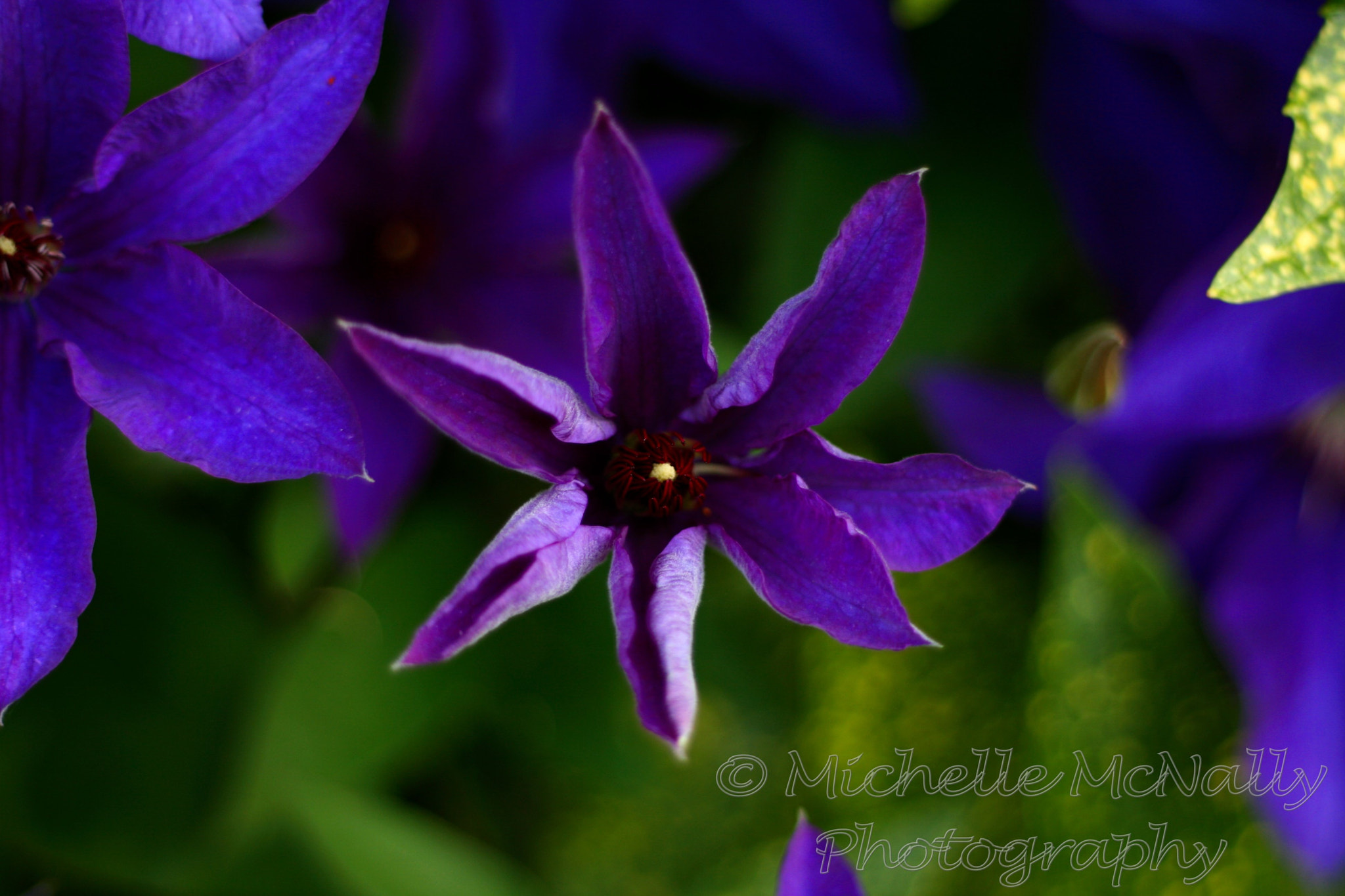 Photograph Purple Star  by Michelle McNally on 500px