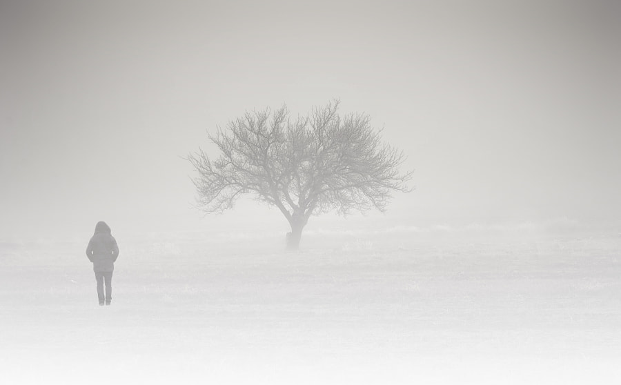 A white dream by landscape photographer Efemir Art on 500px.com