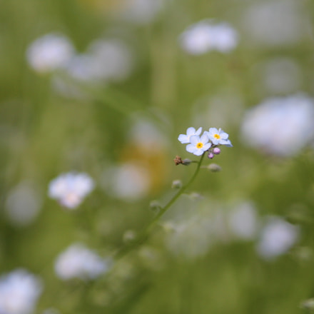 Flower on field, Canon EOS 550D, Tamron SP AF 28-75mm f/2.8 XR Di LD Aspherical [IF] Macro