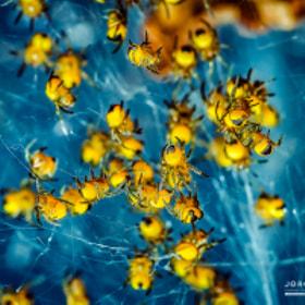 Spiders / Spinnen