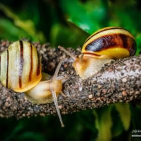 Schnecken | Snails