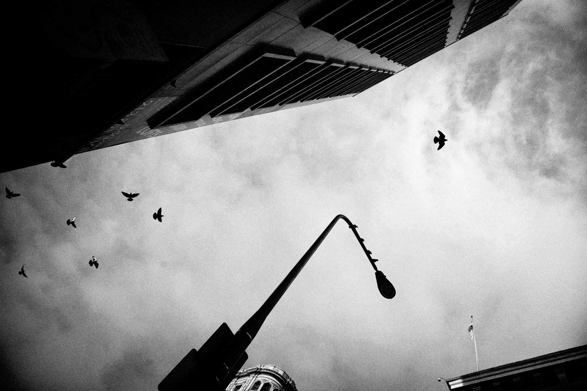 Photograph Solo Flight by Dana Barsuhn on 500px